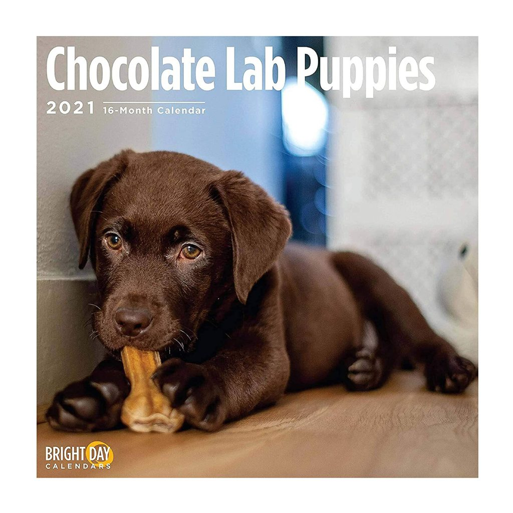 Chocolate Lab Puppies Calendar via Amazon