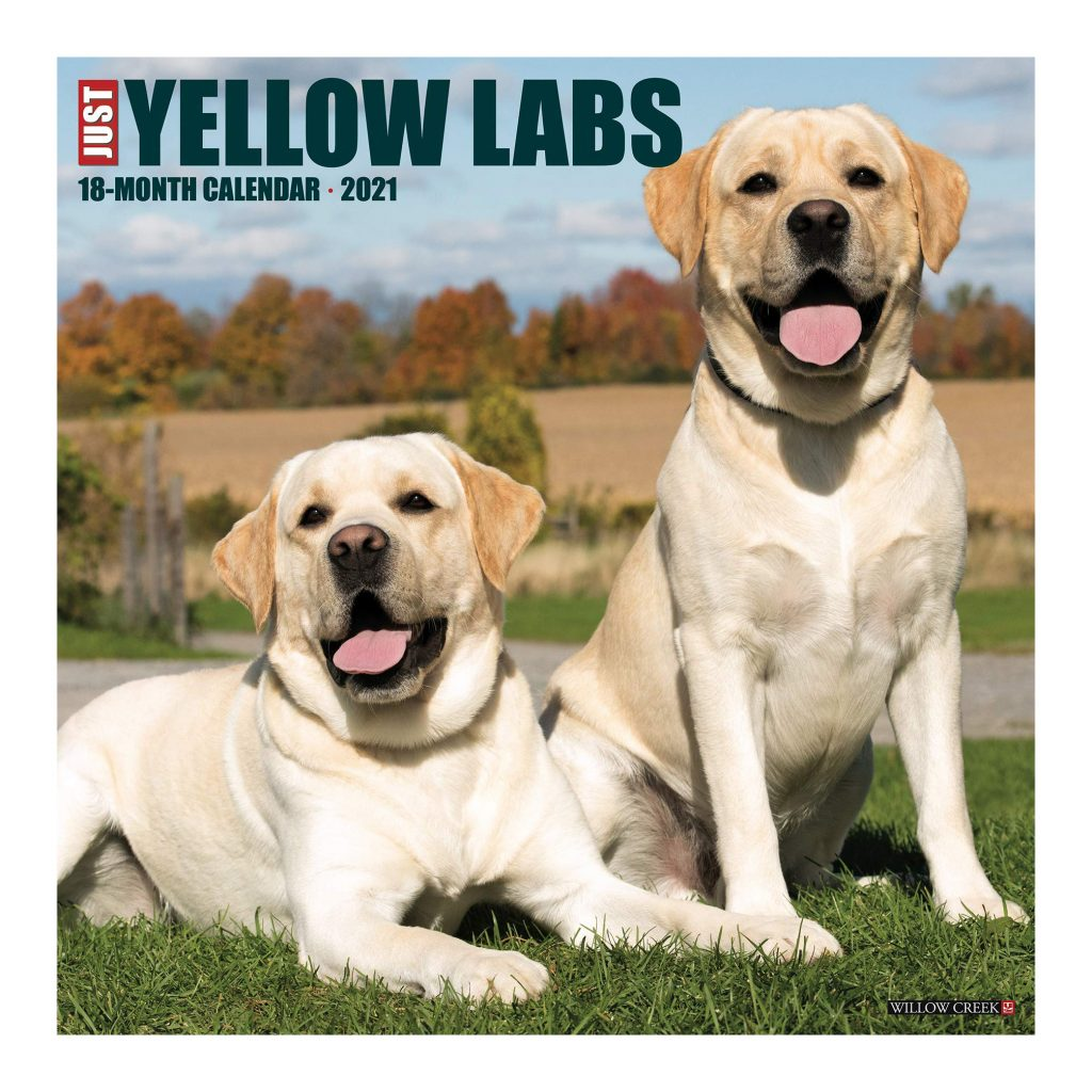 Just Yellow Labs Calendar via Amazon