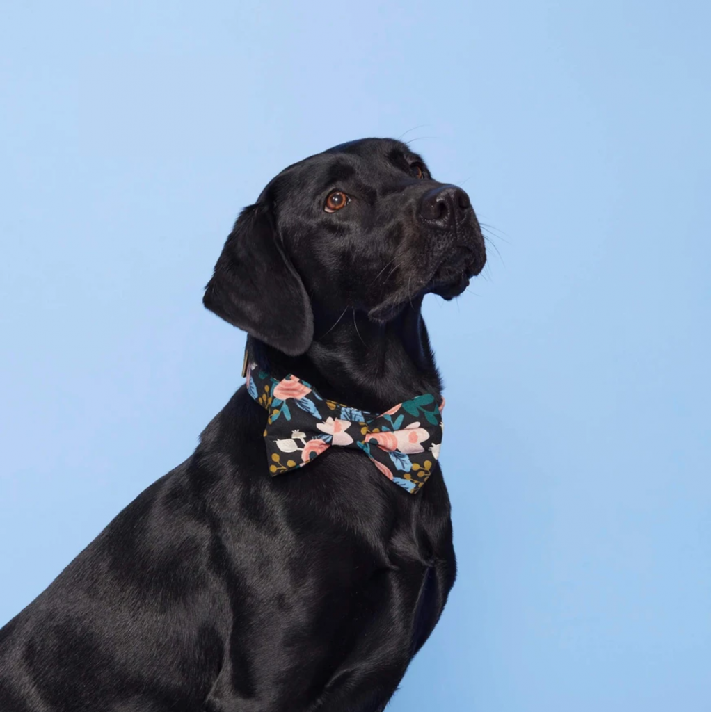 80+ Cute Labrador Themed Gifts for the Lab Lover in Your Life - Image via The Foggy Dog feat. the 'Rosa Floral Navy Dog Bow Tie'