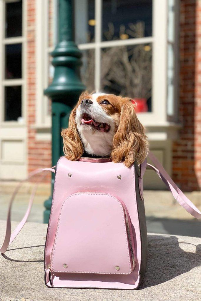 'Blush Pink/Black Shaya Pet Carrier' via Verishop