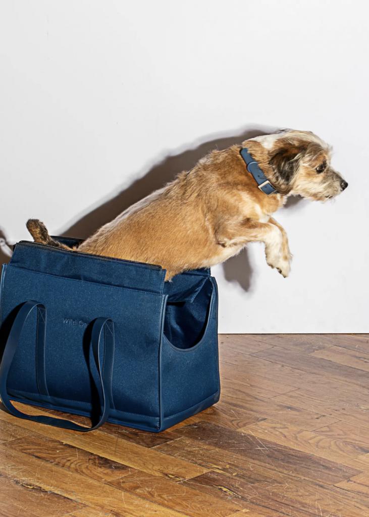 'Wild One Pet Carrier in Blue' via Nordstrom