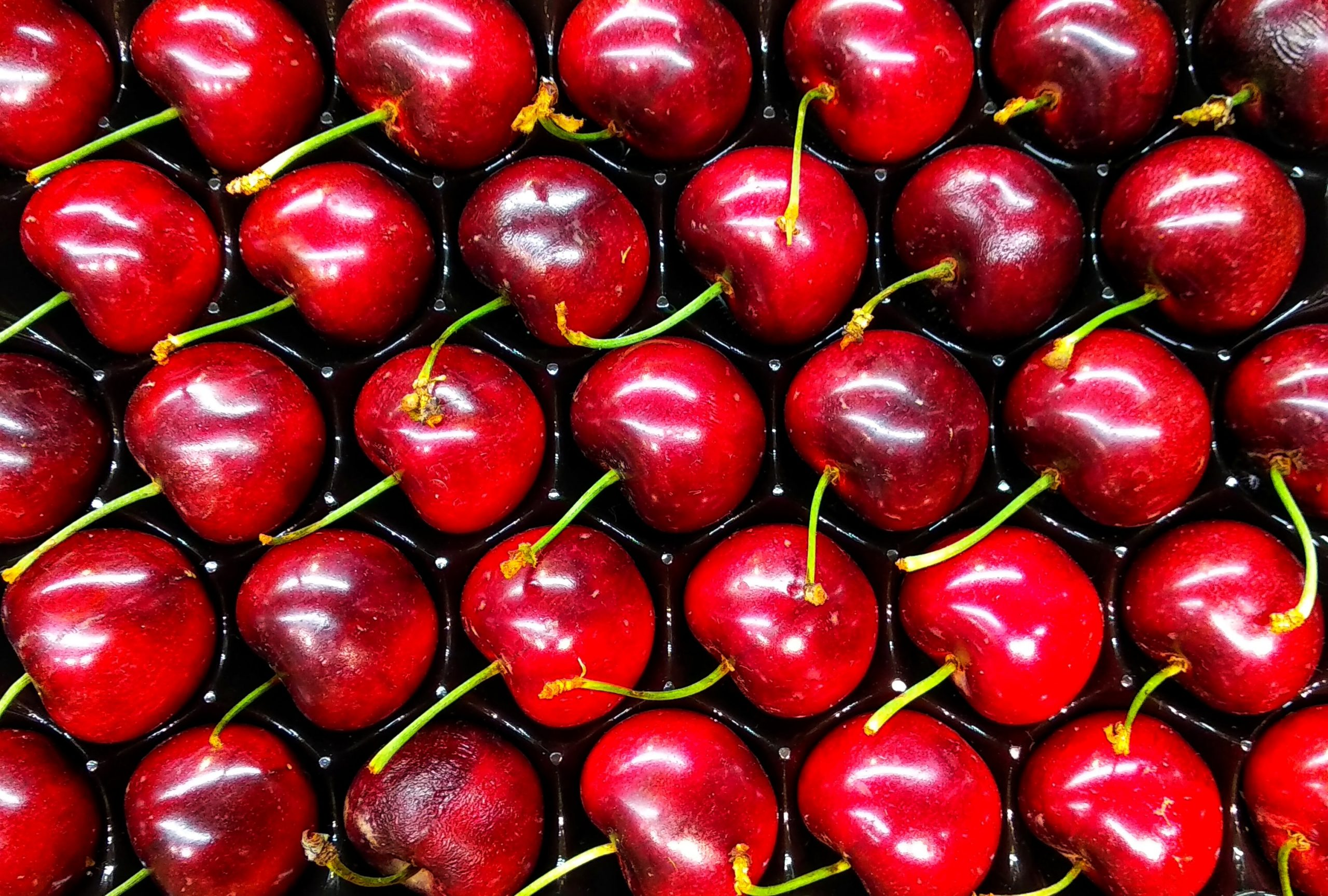 20 Foods Harmful to Dogs - cherries