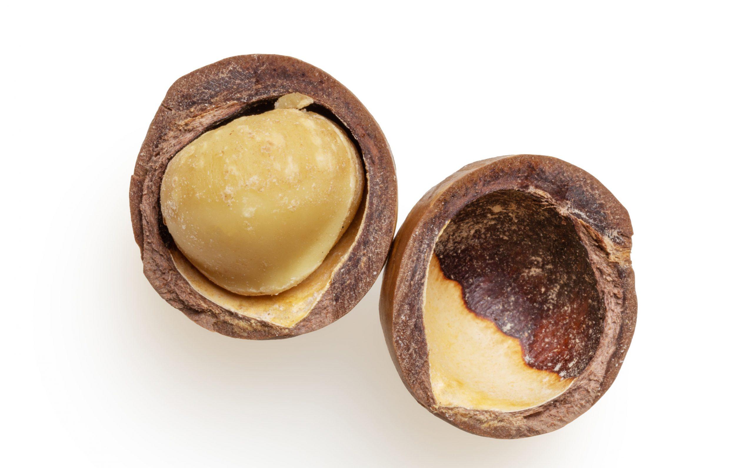 20 Foods Harmful to Dogs - macadamia nuts