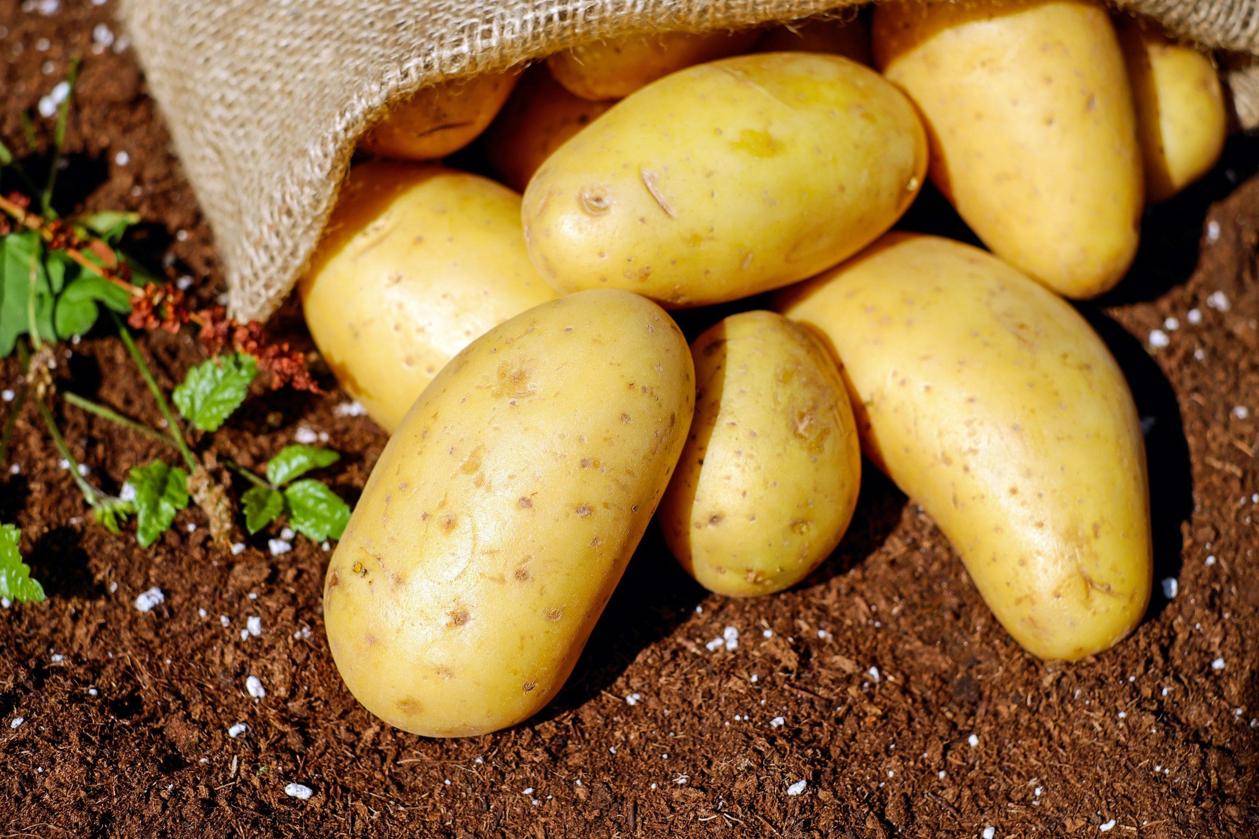 20 Foods Harmful to Dogs - raw potato