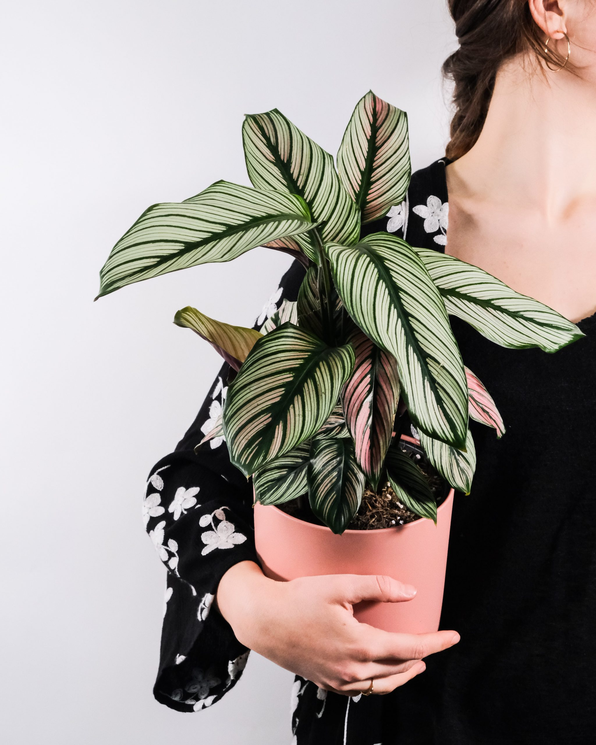 20 Trendy Dog Safe House Plants for 2021 feat. Calathea Majestica White Star - Image via Unsplash, photo by Severin Candrian