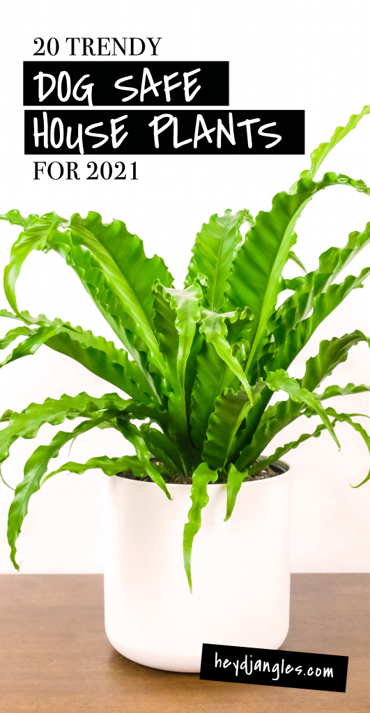 20 Trendy Dog Safe House Plants for 2021