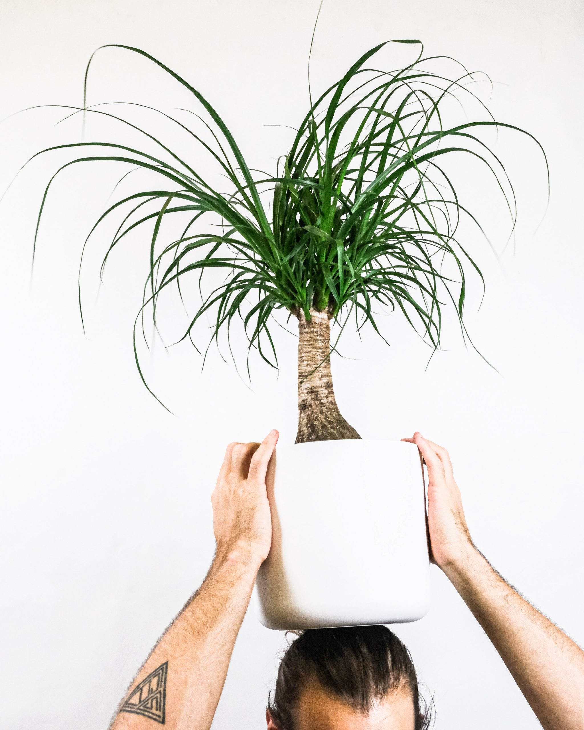 20 Trendy Dog Safe House Plants for 2021 feat. Ponytail Palm - Image via Unsplash, photo by Severin Candrian