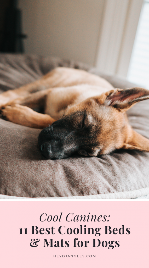 Best Cooling Beds and Mats for Dogs - Hey, Djangles.