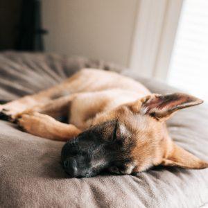 11 Best Cooling Beds for Dogs - Photo by Dex Ezekiel via Unsplash.