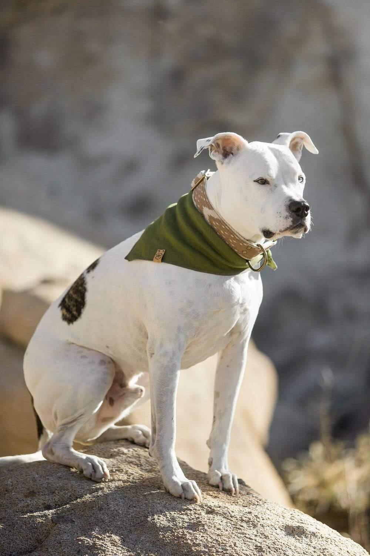 Little Donkey Supply Co. Desert Ikat Cotton and Hemp Dog Collar via Design Milk
