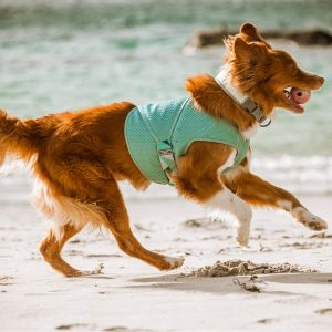 10 Best Cooling Vests for Dogs feat. the Hurtta Cooling Wrap (image via Hurtta)