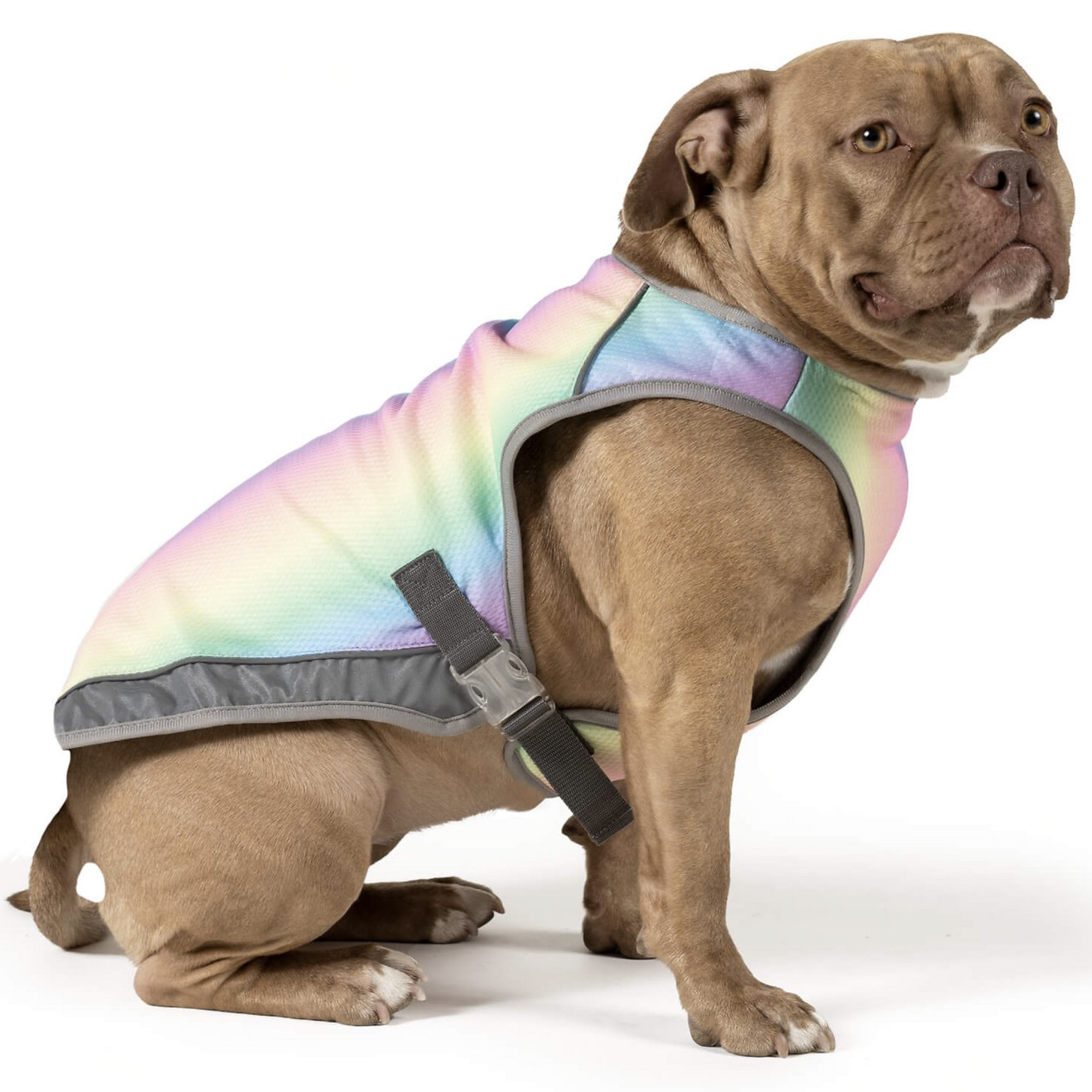 10 Best Cooling Vests for Dogs feat. CANADA POOCH Cooling Dog Vest via Chewy
