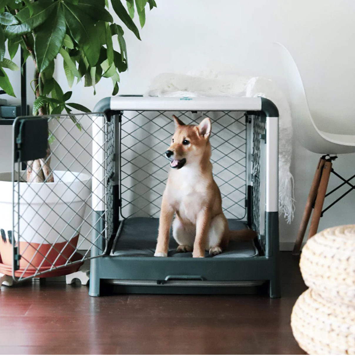 20+ Attractive Dog Crate Options for Modern Pups - feat. Revol Dog Crate via Diggs