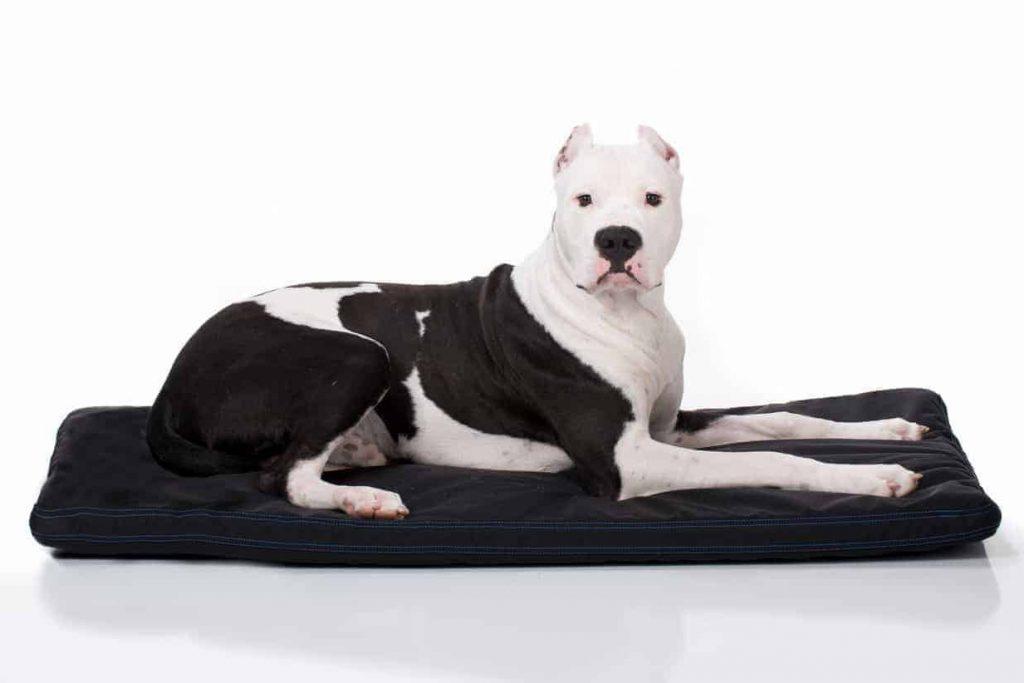 GORILLA BALLISTIC TOUGH ORTHOPEDIC DOG CRATE PAD