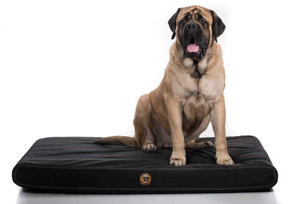 14 Best Tough Dog Beds for Chewers (With Guarantees!) feat. GORILLA BALLISTIC TOUGH ORTHOPEDIC DOG BED