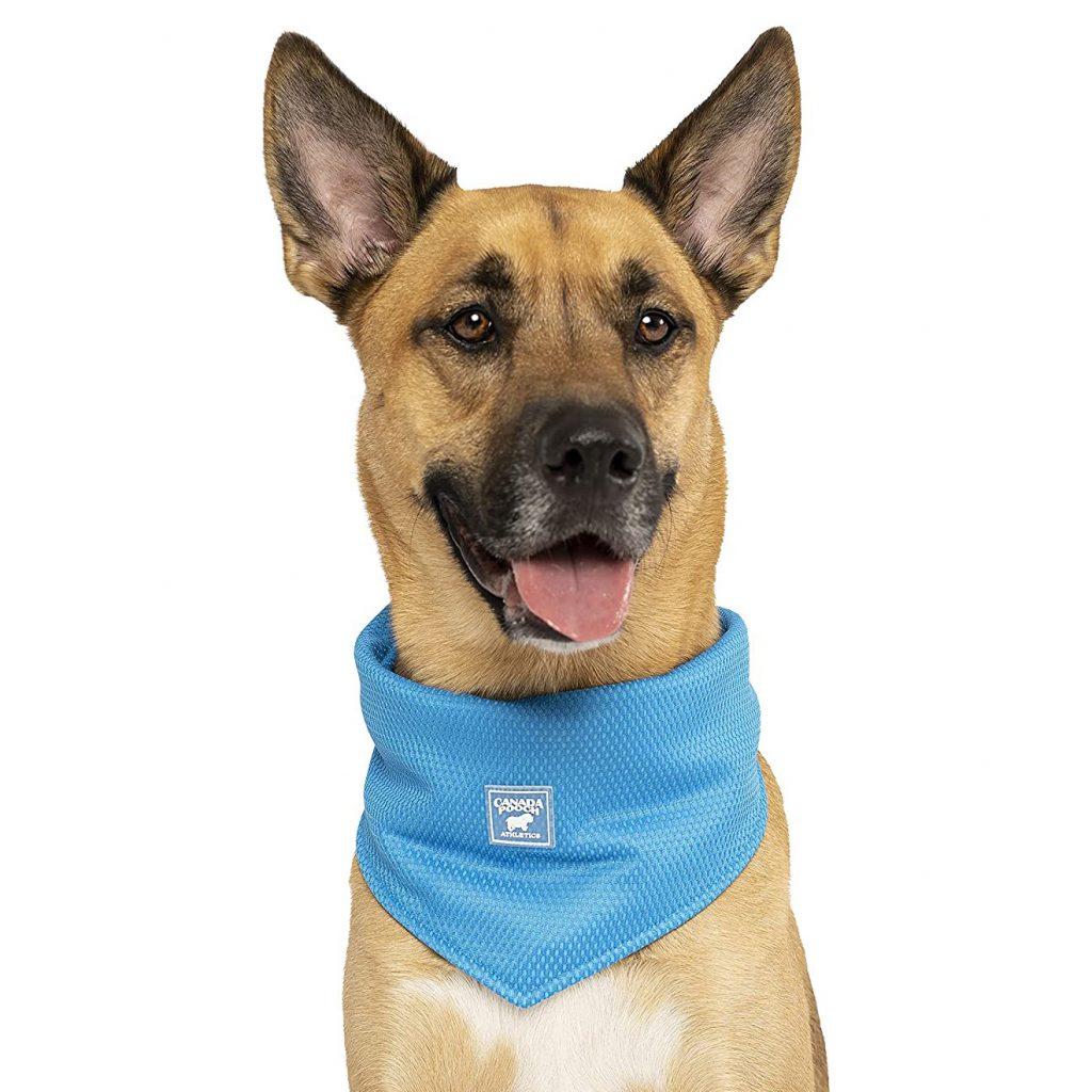 CANADA POOCH Dog Cooling Bandana via Amazon
