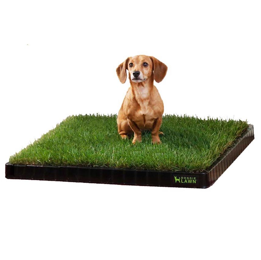 DoggieLawn Real Grass Disposable Dog Potty