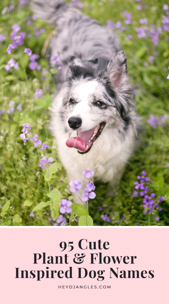 95 Cute Flower and Plant Names for Dogs