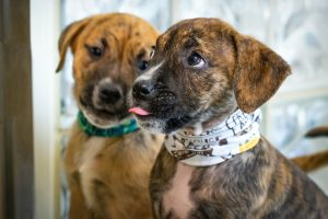100+ Dog Names That Mean New Beginning - rescue pups