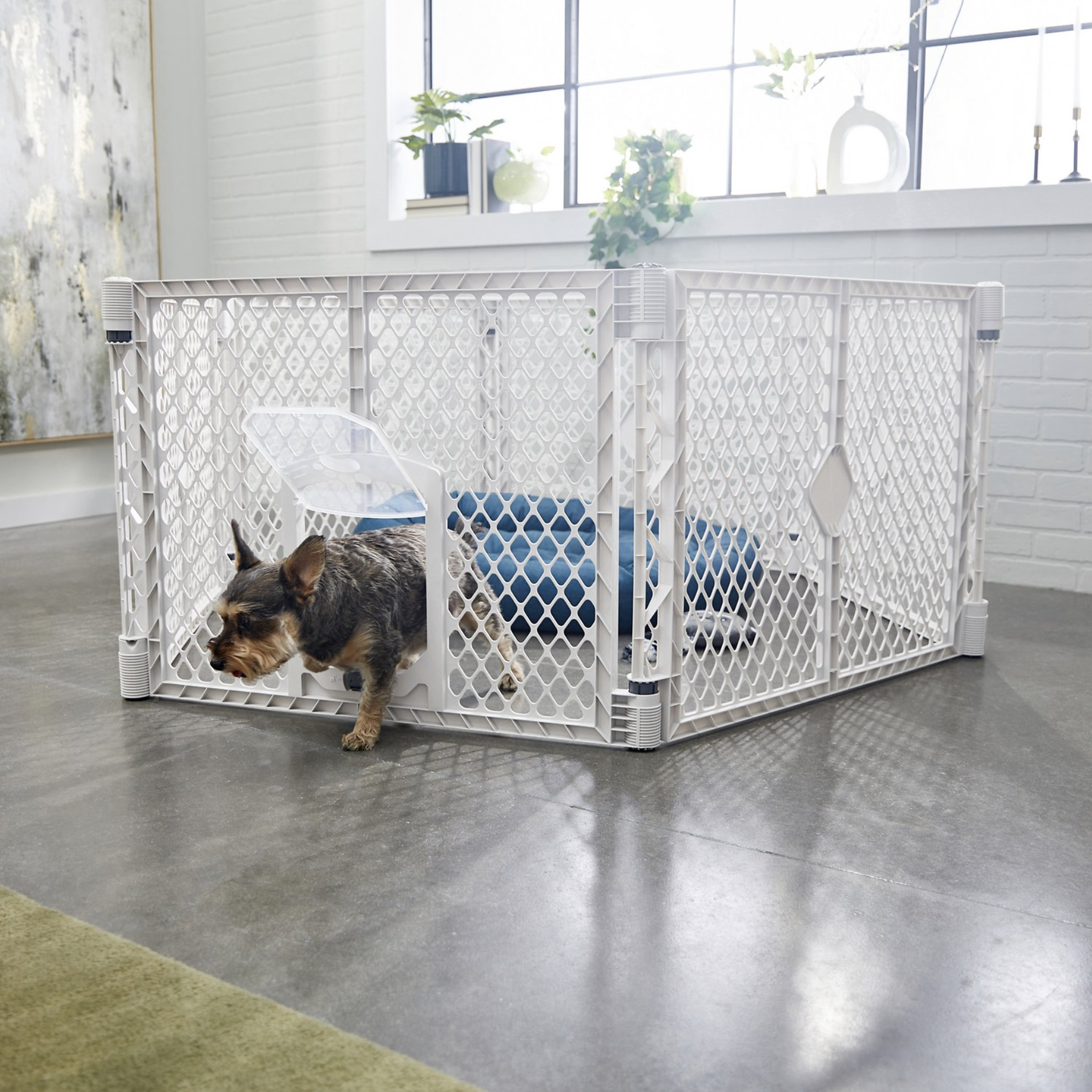 16 Best Expandable Gates for Dogs feat. FRISCO 6-Panel Convertible Plastic Playpen Divider via Chewy