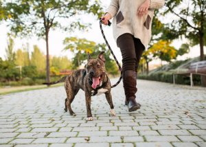 6 Best Dog Leashes for Pullers - featuring popular dog leash brands such as EzyDog, Zee.Dog, Leash Boss, 2 Hounds Design, Harness Lead and more.