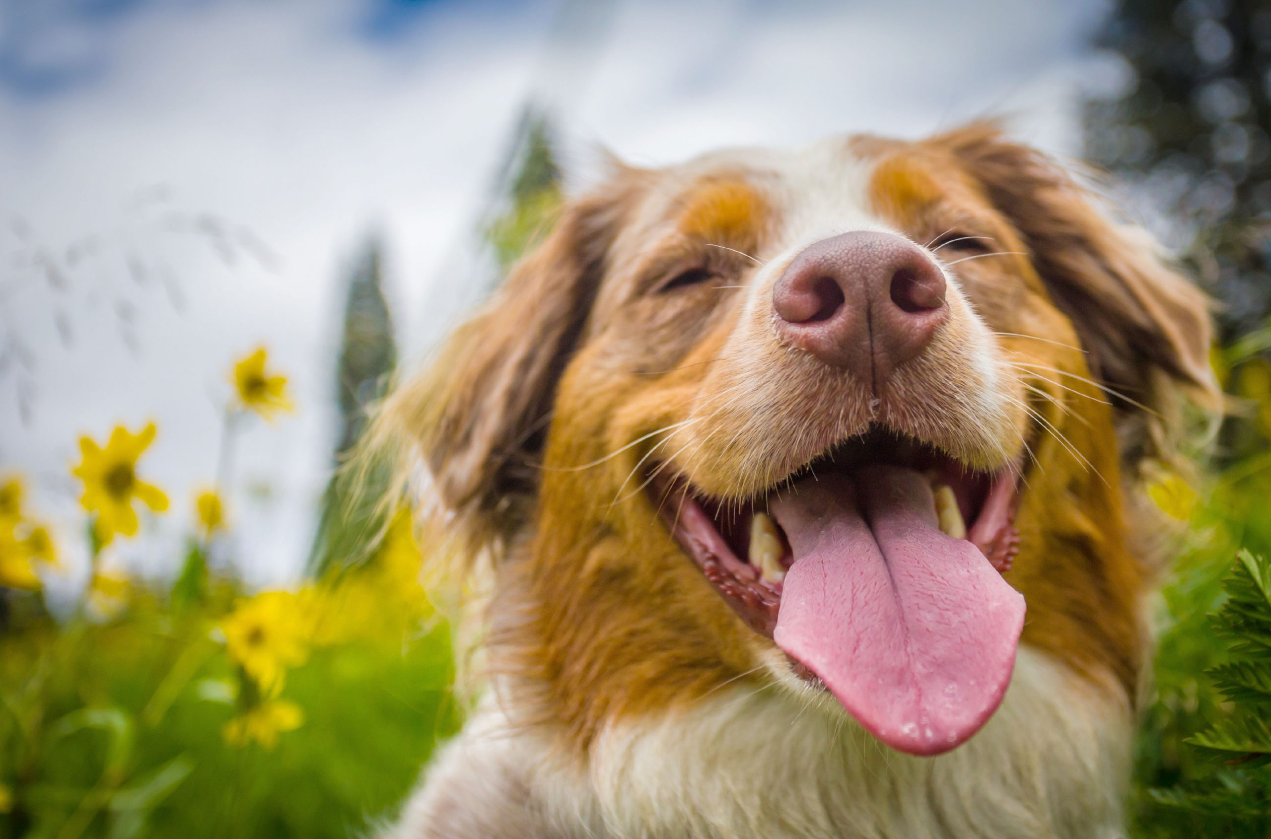 Probiotics for Dogs: Uses, Benefits, and Side Effects