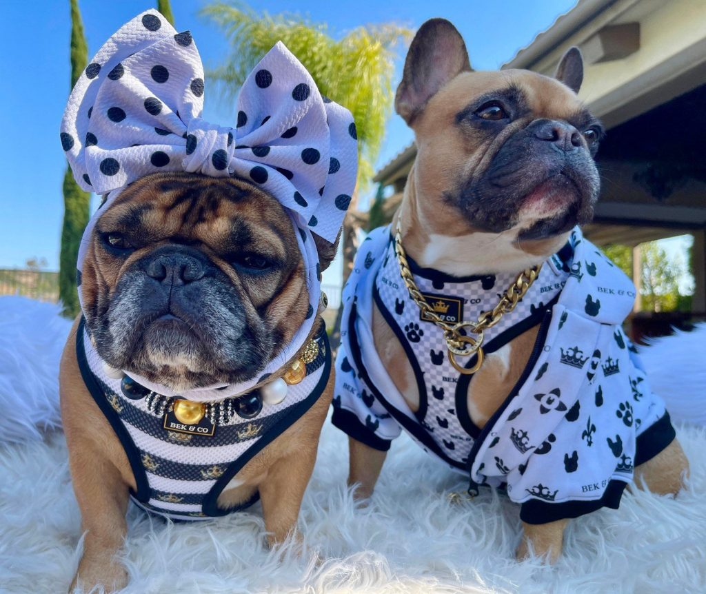 Image via Bek & Co feat: Bek & Co Monogram Dog Hoodie, Bek & Co Monogram Harness, Gold Choke Chain, and Gold and Black Baubles, 2 cute French Bulldogs