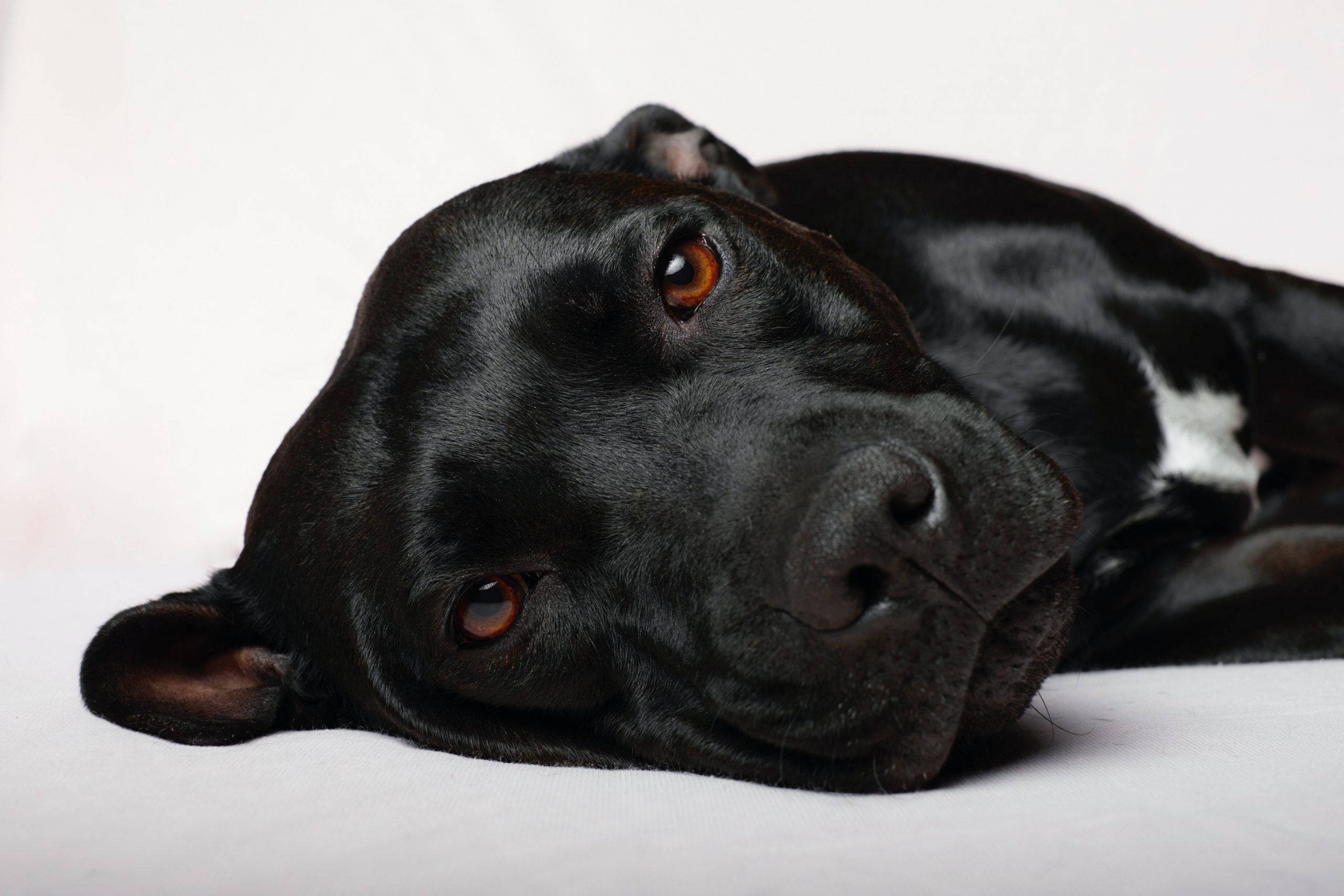 160+ Cute Names for Black Dogs
