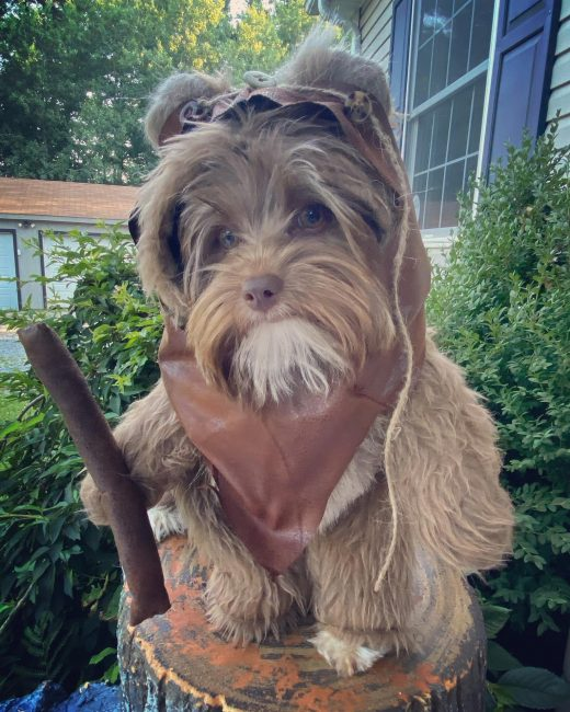 Furry Caramel Woodland Dog Halloween Costume/Hood via Etsy shop SewDoggoneCreative